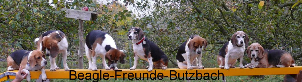 Beagle-Freunde-Butzbach.de